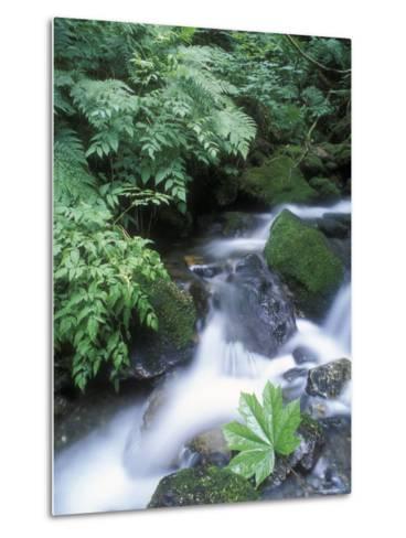 Clean Water Creek Flowing Through Forest Greenery, Alaska-Rich Reid-Metal Print