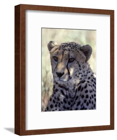 Closeup of a Cheetah, South Africa-Kenneth Garrett-Framed Art Print
