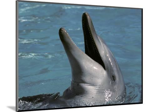 Captive Bottlenose Dolphin Displays It's Teeth Whilst Playing, Australia-Jason Edwards-Mounted Photographic Print