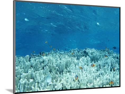 Anemone Fish Hovering over Coral Heads and Crystal Clear Water-James Forte-Mounted Photographic Print