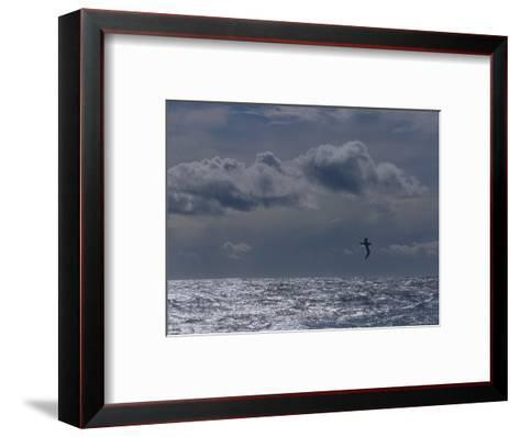 Albatross Silhouette Gliding over the Ocean against Storm Clouds, Australia-Jason Edwards-Framed Art Print