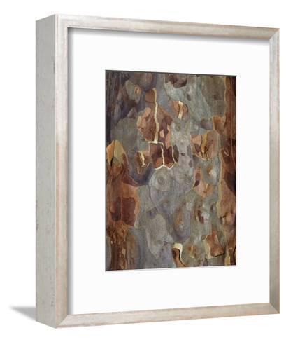Bark Detail of the Spotted Gum Eucalypt Tree, Corymbia Maculata, Australia-Jason Edwards-Framed Art Print