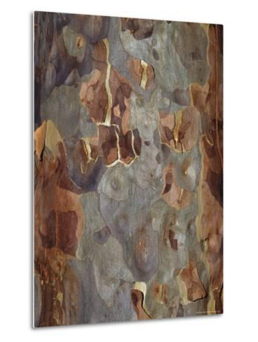 Bark Detail of the Spotted Gum Eucalypt Tree, Corymbia Maculata, Australia-Jason Edwards-Metal Print
