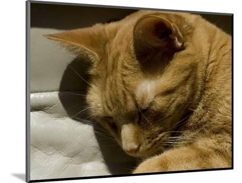 Close View of Orange Tabby Cat Sleeping, Groton, Connecticut-Todd Gipstein-Mounted Photographic Print