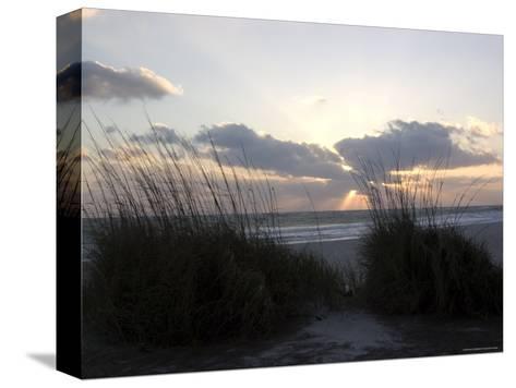 Beach Grass on Anna Maria Island, Holmes Beach, Florida-Stacy Gold-Stretched Canvas Print