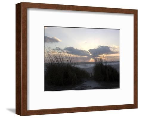Beach Grass on Anna Maria Island, Holmes Beach, Florida-Stacy Gold-Framed Art Print
