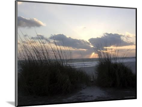 Beach Grass on Anna Maria Island, Holmes Beach, Florida-Stacy Gold-Mounted Photographic Print