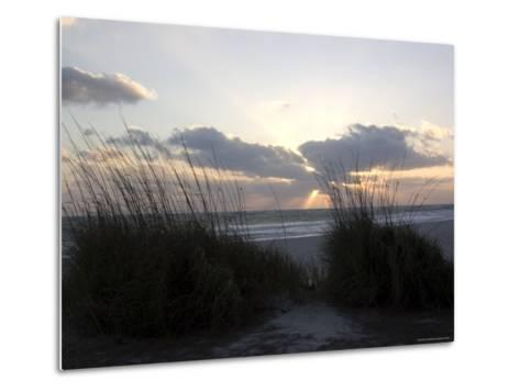 Beach Grass on Anna Maria Island, Holmes Beach, Florida-Stacy Gold-Metal Print