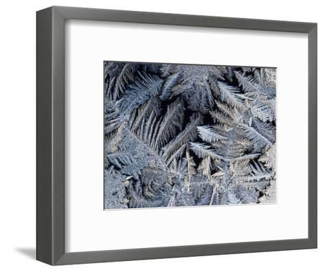 Close View of Frost Crystals-Tim Laman-Framed Art Print