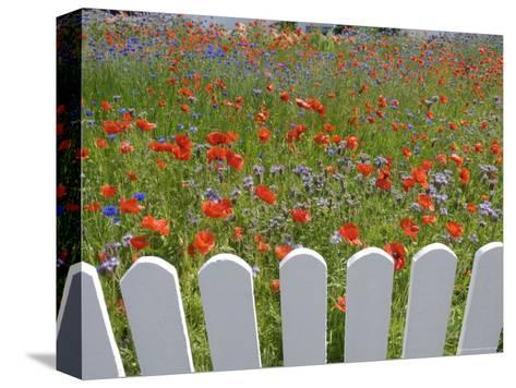 Denmark, Skagen, Garden of Red Poppies-Brimberg & Coulson-Stretched Canvas Print