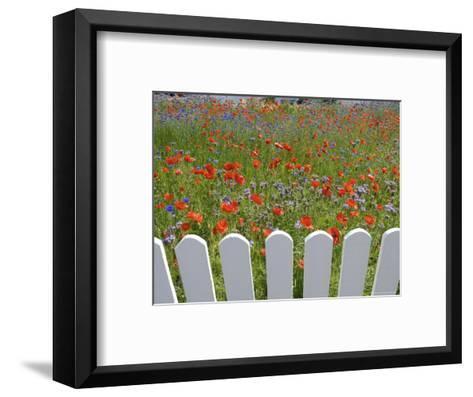 Denmark, Skagen, Garden of Red Poppies-Brimberg & Coulson-Framed Art Print