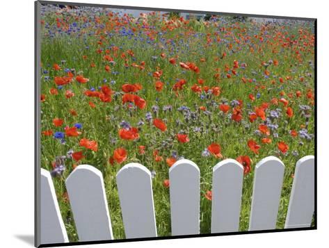 Denmark, Skagen, Garden of Red Poppies-Brimberg & Coulson-Mounted Photographic Print