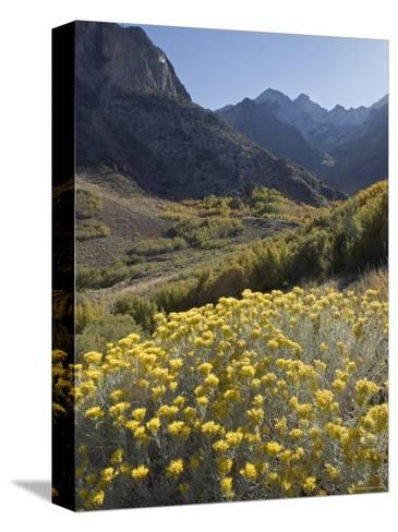 Fall Colors at Mcgee Creek near Mammoth Lakes, California-Rich Reid-Stretched Canvas Print