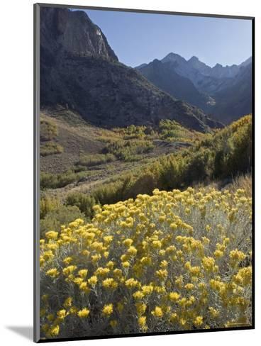 Fall Colors at Mcgee Creek near Mammoth Lakes, California-Rich Reid-Mounted Photographic Print