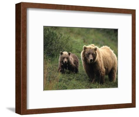 Grizzly Sow and Cub, Alaska-Michael S^ Quinton-Framed Art Print