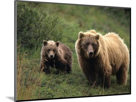 Grizzly Sow and Cub, Alaska-Michael S^ Quinton-Mounted Photographic Print