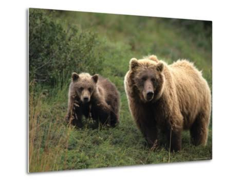Grizzly Sow and Cub, Alaska-Michael S^ Quinton-Metal Print