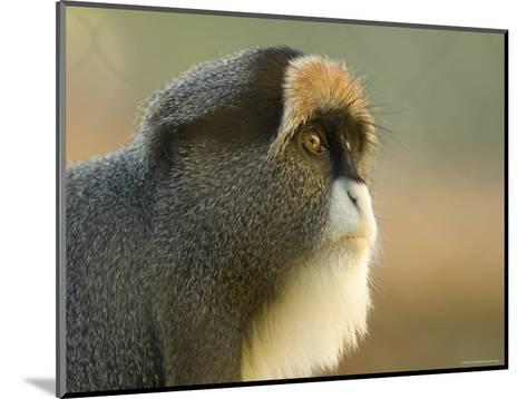 Debrazza's Monkey at the Sedgwick County Zoo, Kansas-Joel Sartore-Mounted Photographic Print