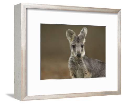 Female Wallaroo at the Sedgwick County Zoo-Joel Sartore-Framed Art Print