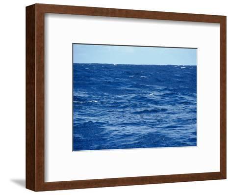 Flock of Wilsons Storm Petrels Feeding on the Ocean Surface, Australia-Jason Edwards-Framed Art Print