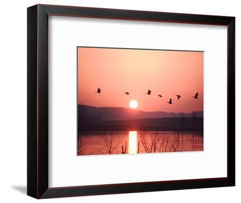 Flock of Canada Geese Flying over a Lake at Sunset, Pennsylvania-Ira Block-Framed Art Print