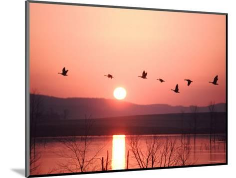 Flock of Canada Geese Flying over a Lake at Sunset, Pennsylvania-Ira Block-Mounted Photographic Print