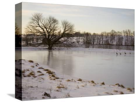 Geese Explore the Frozen Surface of a Country Pond-Stephen St^ John-Stretched Canvas Print