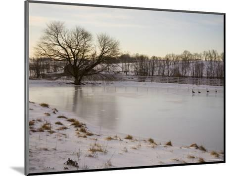 Geese Explore the Frozen Surface of a Country Pond-Stephen St^ John-Mounted Photographic Print