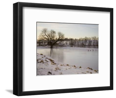 Geese Explore the Frozen Surface of a Country Pond-Stephen St^ John-Framed Art Print