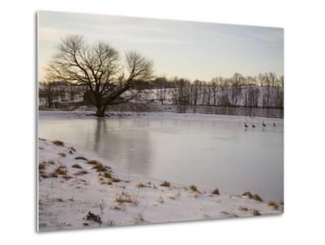 Geese Explore the Frozen Surface of a Country Pond-Stephen St^ John-Metal Print