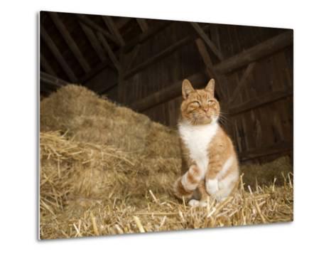 Farm Cat Sitting on a Bale of Straw, Massachusetts-Tim Laman-Metal Print