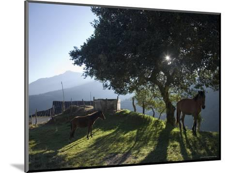 Horse, Colt as Dawn Shines Through Tree by House in Venezuelan Andes-David Evans-Mounted Photographic Print