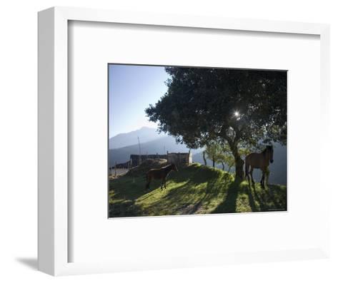 Horse, Colt as Dawn Shines Through Tree by House in Venezuelan Andes-David Evans-Framed Art Print