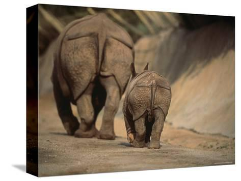 Indian Rhinoceros and Her Baby at a Zoo, San Diego, California-Michael Nichols-Stretched Canvas Print