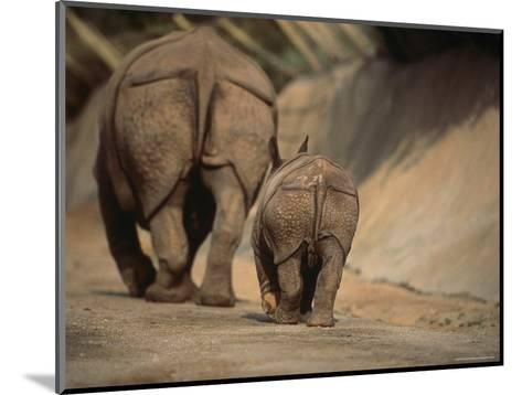 Indian Rhinoceros and Her Baby at a Zoo, San Diego, California-Michael Nichols-Mounted Photographic Print