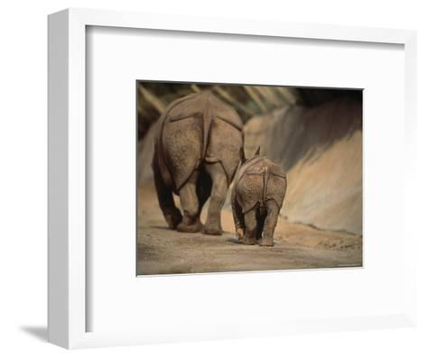 Indian Rhinoceros and Her Baby at a Zoo, San Diego, California-Michael Nichols-Framed Art Print
