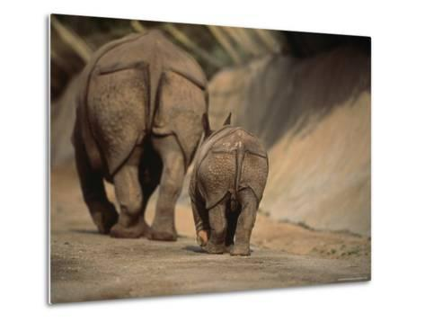 Indian Rhinoceros and Her Baby at a Zoo, San Diego, California-Michael Nichols-Metal Print