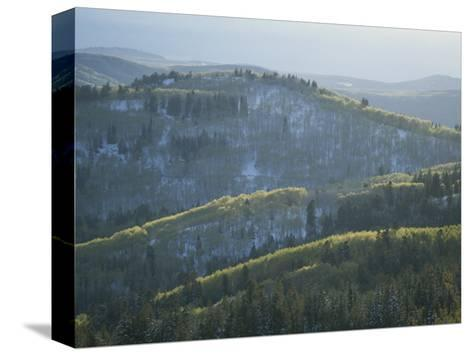 Fresh Green Aspen Trees on Snowy Slopes in the Wasatch Range, Utah-James P^ Blair-Stretched Canvas Print