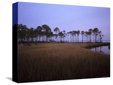 Landscape of a Swamp in Florida-Stacy Gold-Stretched Canvas Print
