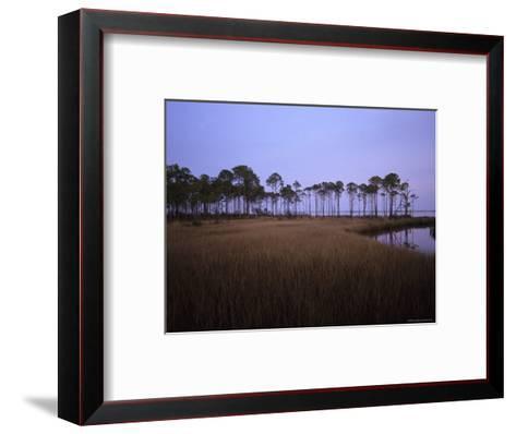 Landscape of a Swamp in Florida-Stacy Gold-Framed Art Print