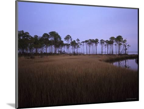 Landscape of a Swamp in Florida-Stacy Gold-Mounted Photographic Print