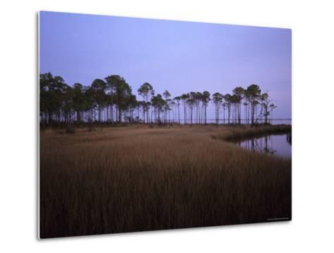 Landscape of a Swamp in Florida-Stacy Gold-Metal Print