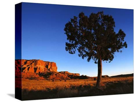 Pine Tree in Barren Land, New Mexico-Brimberg & Coulson-Stretched Canvas Print
