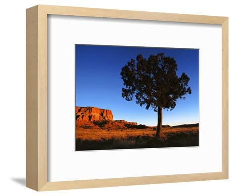 Pine Tree in Barren Land, New Mexico-Brimberg & Coulson-Framed Art Print