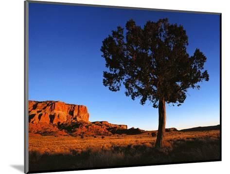 Pine Tree in Barren Land, New Mexico-Brimberg & Coulson-Mounted Photographic Print