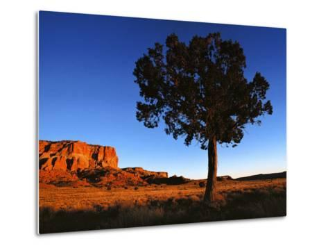 Pine Tree in Barren Land, New Mexico-Brimberg & Coulson-Metal Print