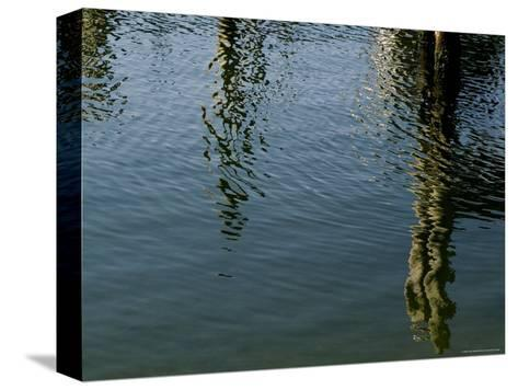 Pilings of a Pier Reflected in Block Island Sound-Todd Gipstein-Stretched Canvas Print