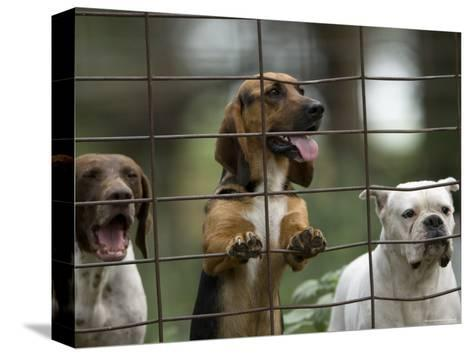 Rescued Dogs at a Wildlife Rescue Member's Home in Eastern Nebraska-Joel Sartore-Stretched Canvas Print
