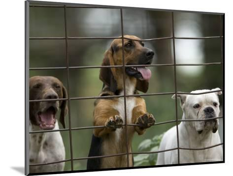 Rescued Dogs at a Wildlife Rescue Member's Home in Eastern Nebraska-Joel Sartore-Mounted Photographic Print