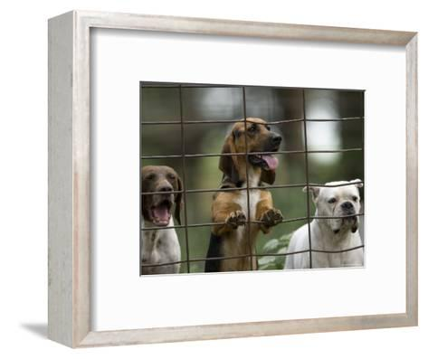 Rescued Dogs at a Wildlife Rescue Member's Home in Eastern Nebraska-Joel Sartore-Framed Art Print